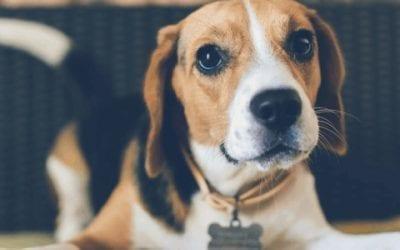 Leuke spelletjes om met je Beagle te doen