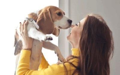 Je herkent een Beagle aan deze typische kenmerken