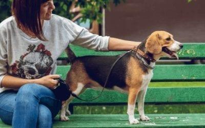 Alles over de eigenschappen van jouw (toekomstige) Beagle
