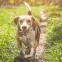 Op zoek naar Beagle namen? Laat je hier inspireren