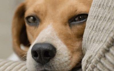 [2021] Top 3: beste hondenbenches voor jouw Beagle